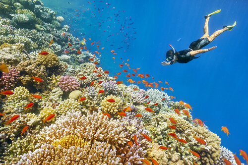 Don't hold your breath while planning your next snorkel adventure