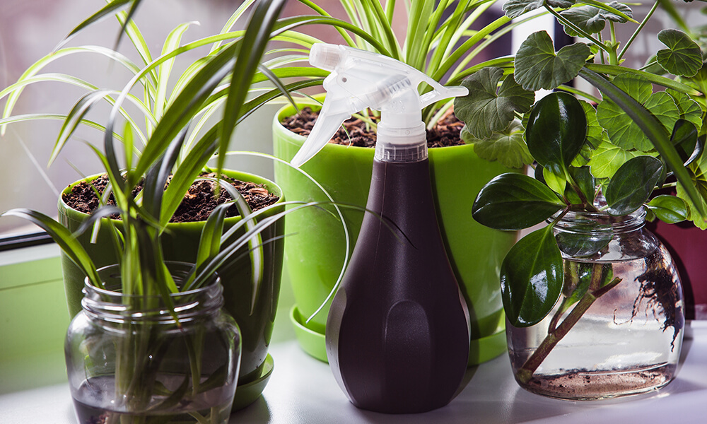 houseplants with spray bottle on counter