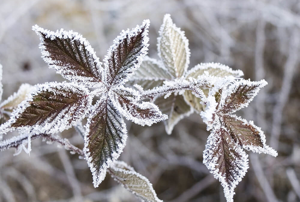 Protect Your Plants From Frost