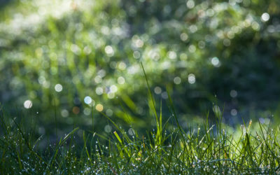 A Guide to Autumn Lawn Watering