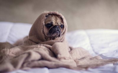 7 WAYS TO PROTECT YOUR PET DURING WINTER